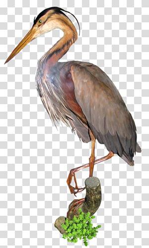 Crane Bird Great egret , crane PNG clipart