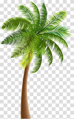 green coconut tree illustration, Arecaceae Tree Coconut , palm tree PNG clipart