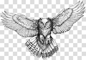 Owl Drawings for Tattoos Drawings for Tattoos Flash, others PNG