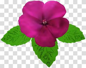 Magenta Flower PNG