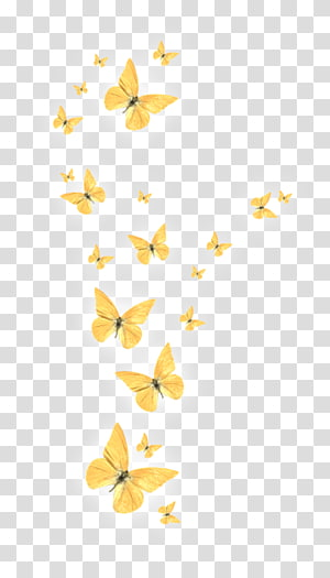 Portable Network Graphics Butterfly Desktop , butterfly PNG