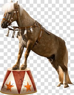 Horse Circus Clown, horse PNG