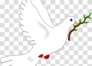 Columbidae Peace symbols Doves as symbols Olive branch, symbol PNG clipart