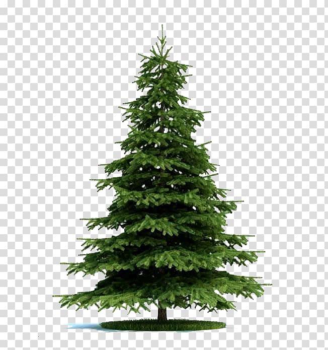 Christmas tree , Blue spruce Tree Norway spruce Plant Pine ...