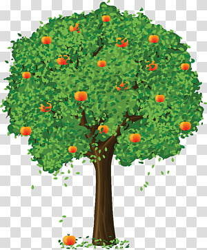 Apple Fruit tree , apple PNG clipart