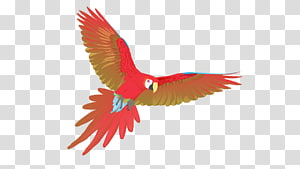 Macaw Uppsala Beak Feather Child, feather PNG clipart
