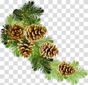 Pine Conifer cone Fir Christmas , christmas PNG