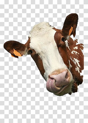Cattle Paper Sticker Get-well card, others PNG