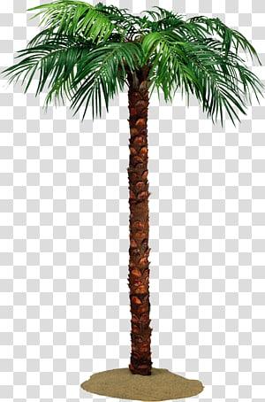 Arecaceae Tree Crown Date palms Raffia palm, palm tree PNG clipart