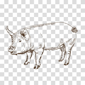 Pig Cattle Ox Bull Snout, and imported snacks PNG