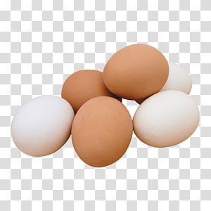 egg PNG clipart