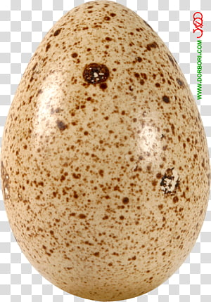 Quail eggs GIF Chicken Food, Egg FOOD PNG clipart