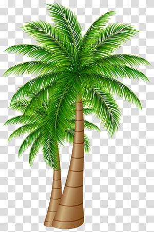 Arecaceae Date palm Coconut , date palm PNG clipart