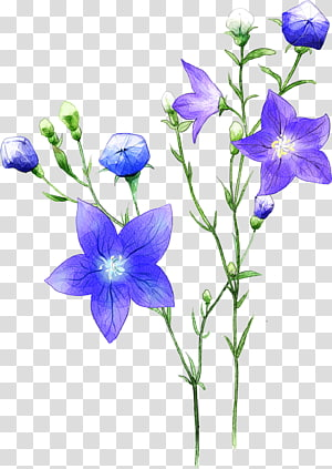 flowers,flowers,flowers PNG clipart