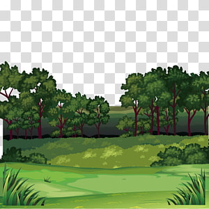 green trees illustration, Forest , Jungle scenery PNG clipart