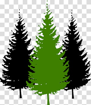 Pine graphics Tree Fir, tree PNG clipart