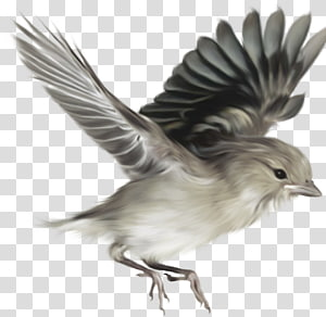 Bird House Sparrow Digital Desktop , sparrow PNG
