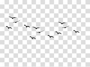 silhouette of flying birds , Bird flight Flock , Bird PNG clipart