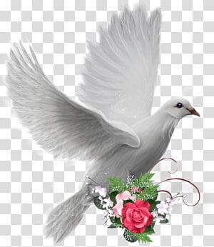 Domestic pigeon Columbidae Bird, Bird PNG