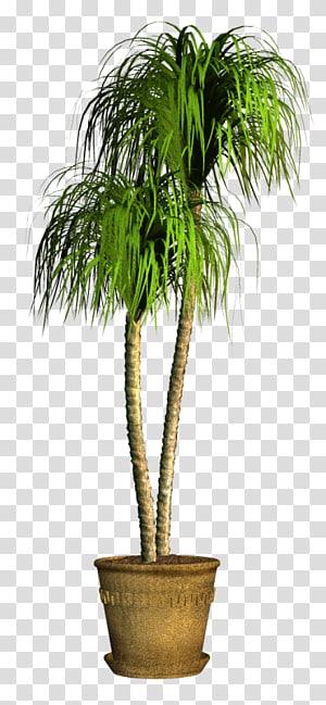 Coconut Flowerpot Houseplant Date palm Evergreen, coconut PNG clipart