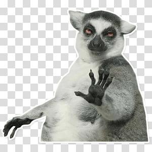 Internet meme Cat Humour Laughter, meme PNG clipart