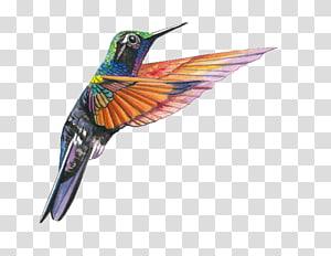 Garnet-throated hummingbird Lamprolaima Beak, Hummingbird PNG