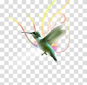 Hummingbird Almas Del Silencio Violetear, others PNG