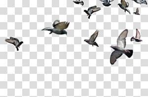 Bird Encapsulated PostScript TIFF , flock of birds PNG