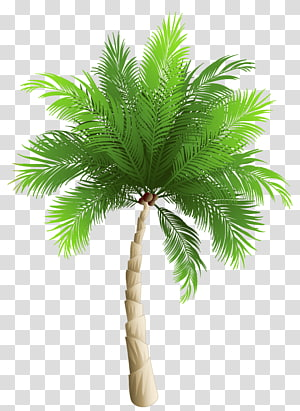 Palm trees Date palm Phoenix canariensis Coconut, Palm Tree , green palm tree artwork PNG clipart