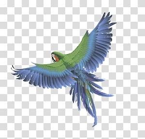 Parrot Bird Columbidae Budgerigar , Flying parrot PNG