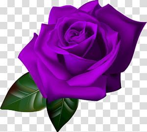 Flower Garden roses, flower PNG clipart