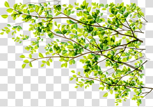 Tree Green Branch Sunlight, Green plant numbers PNG clipart