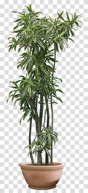 Plant , plant PNG