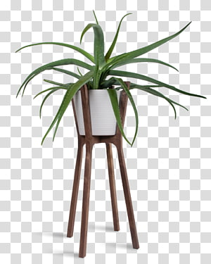 Woody plant Flowerpot Table Houseplant, plant PNG