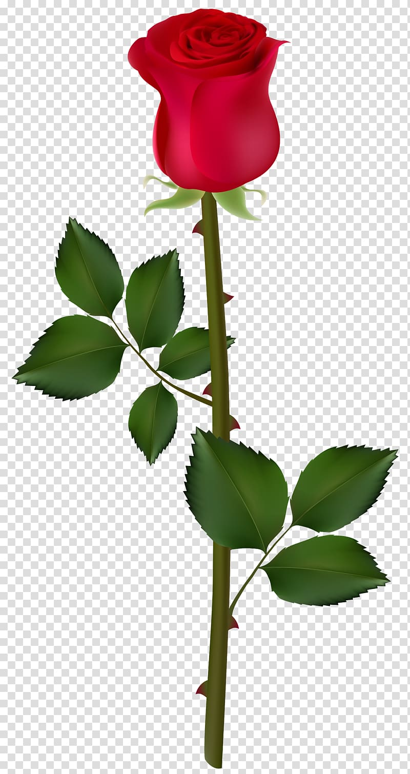 red rose flower illustration, Rose Graphics , Red Rose PNG clipart