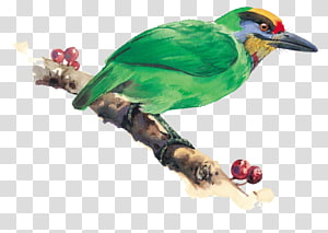 green bird on tree branch, Bird-and-flower painting Watercolor painting Illustration, bird PNG