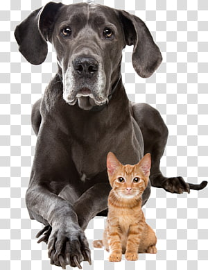 Dog–cat relationship Puppy Presa Canario Staffordshire Bull Terrier, Cat PNG