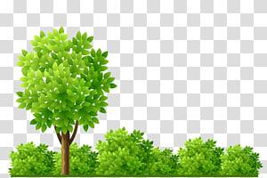 green tree illustration, Garden Shrub Tree Illustration, tree PNG clipart