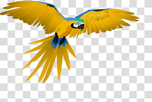 Macaw Parrot Beak Feather Wing, parrot PNG clipart