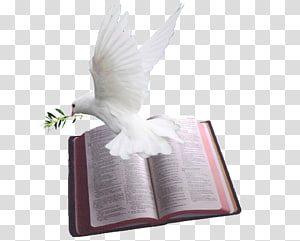 white dove on gray book page illustration, Chapters and verses of the Bible Psalms Doves as symbols God, holy bible PNG clipart