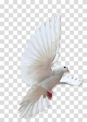 Rock dove Columbidae Bird Release dove, Made Of Honor PNG