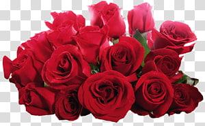 Desktop Rose Flower , flores vermelhas PNG clipart