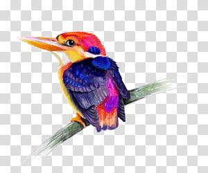 Bird Kingfisher, Bird PNG