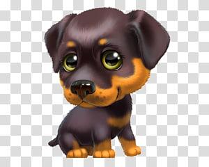 Puppy Boykin Spaniel Yorkshire Terrier Pug Cuteness, puppy PNG