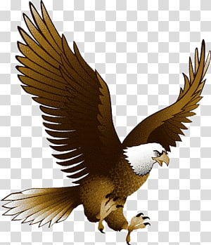 Eagle , Eagle with transparency, free PNG clipart