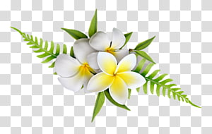 Petal Flowering plant Cut flowers Plants, frangipani bali PNG clipart