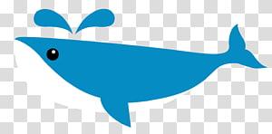 Dolphin Shark Whale , shark PNG clipart