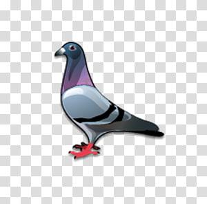 dove Bird Columbidae Icon, pigeon PNG