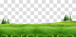 green grass field, Lawn Gratis , Green grass background free of material PNG