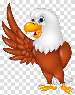 Eagle, philippine eagle PNG clipart